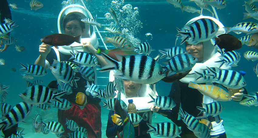 様々な熱帯魚を観察することができます