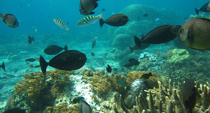 色とりどりの魚やサンゴ礁