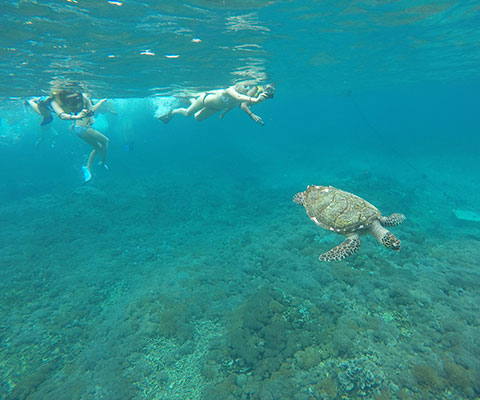 バリ島とはまた違った景色をお楽しみいただけます