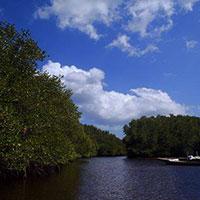 バリ島 マングローブの森