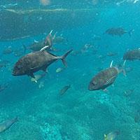 バリ島 ヌサペニダ島周辺