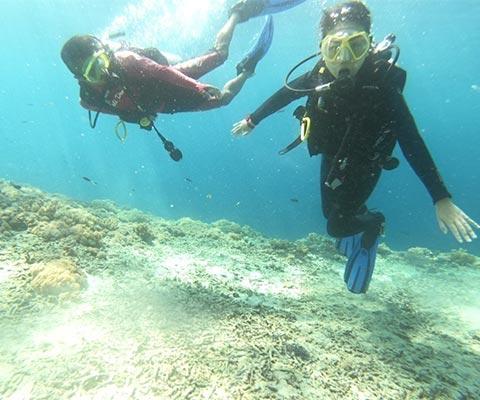 透明度の高い海を潜るファンダイブ
