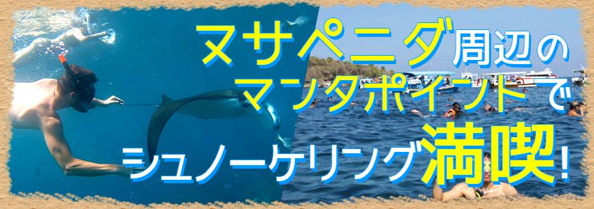 バリ島 感動の出会い マンタポイントでマンタと一緒にシュノーケリング 特徴