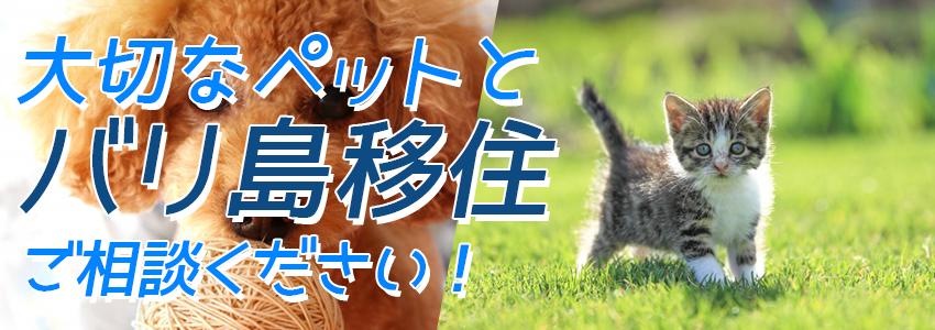 バリ島 ペット(犬、猫等)移住 特徴