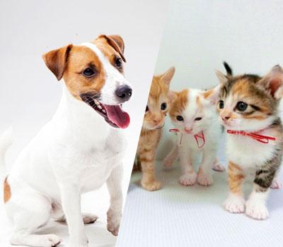 バリ島 ペット(犬、猫等)移住 画像