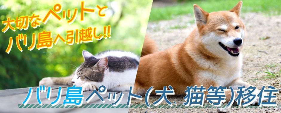 バリ島 ペット(犬、猫等)移住