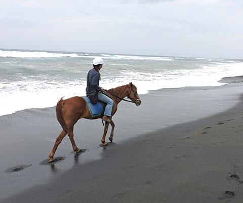 ビーチをゆっくりと馬に乗って散歩します