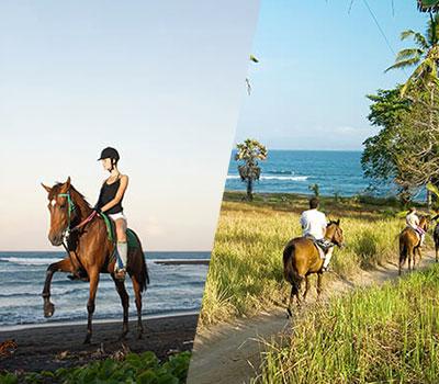 東部サバビーチ ホースライド 画像