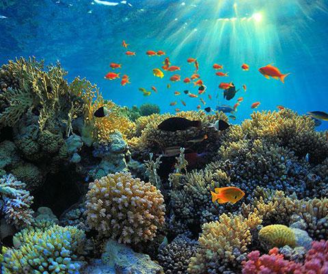 色鮮やかな魚やサンゴ礁を見ることができます