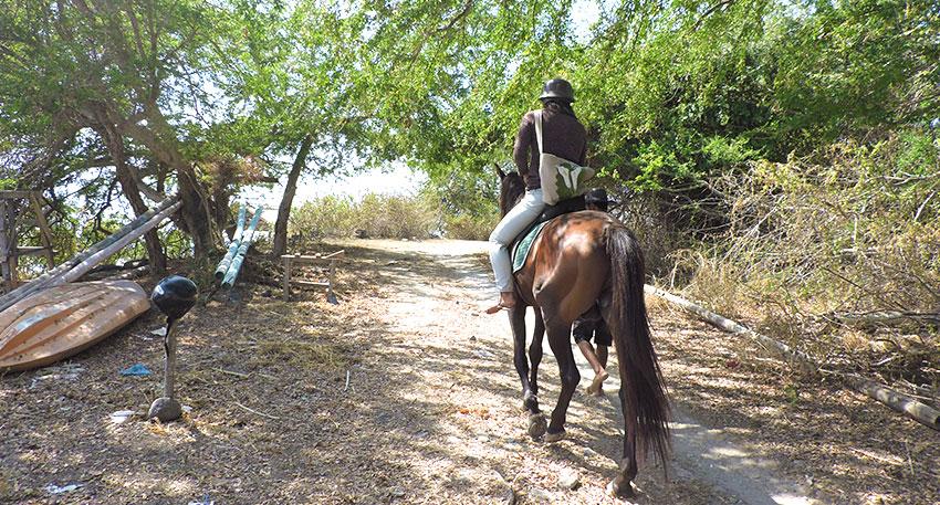 乗馬初心者も安心して体験できます