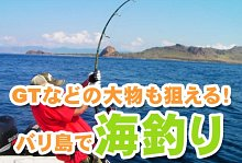 バリ島 観光バリ島 厳選マリンスポーツ シーウォーカー・パッケージ7in1 バリ ドルフィン社