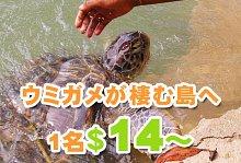 海亀を保護するエコな島!カメの島