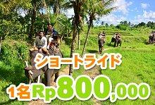 バリ島 観光バリ島 厳選動物ふれあい エレファントキャンプ