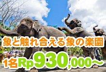 バリ島 観光バリ島 厳選動物ふれあい エレファントサファリパーク
